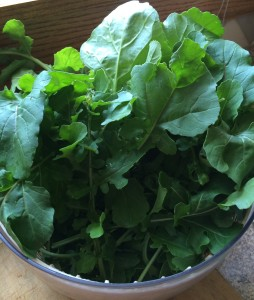Arugula, fresh from the garden.